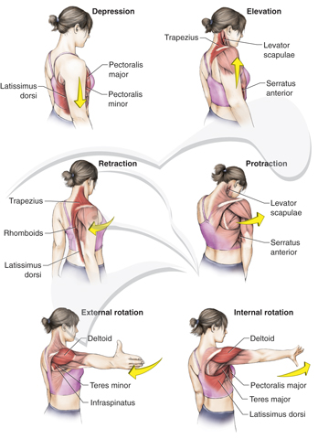 Image Gallery shoulder movements